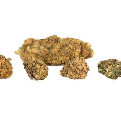 Blüten von Mango Haze Cannabis cbd