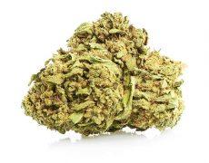 White Widow Cannabis Blüte Sorte