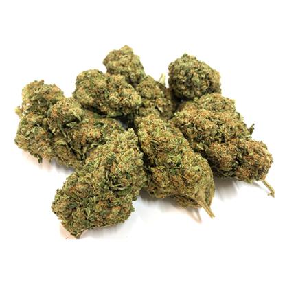 bubblegum-cannabis-planze