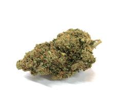 Bubblegum CBD Cannabis
