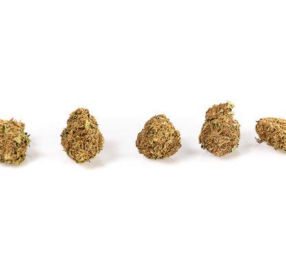 Melon Kush CBD Cannabis