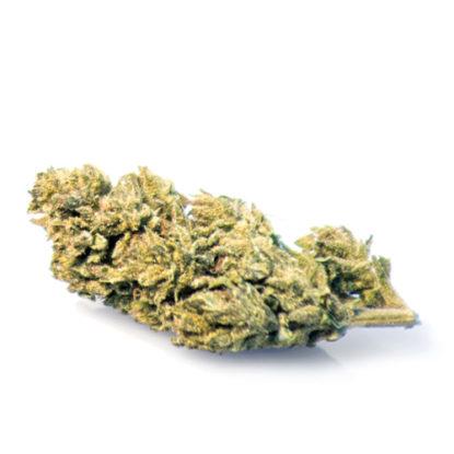 melon-kush-cbd-bluten-cannabis