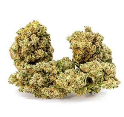 gorilla-glue-marihuana-pflantze
