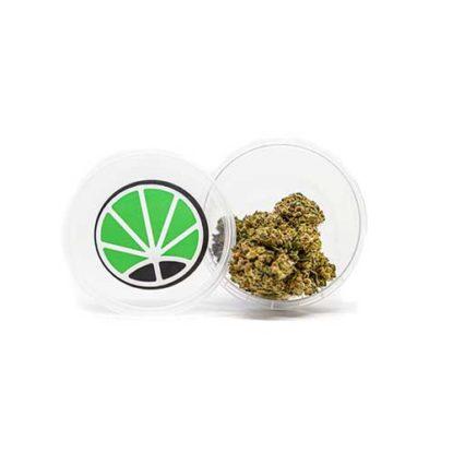 gorilla-glue-marijuana