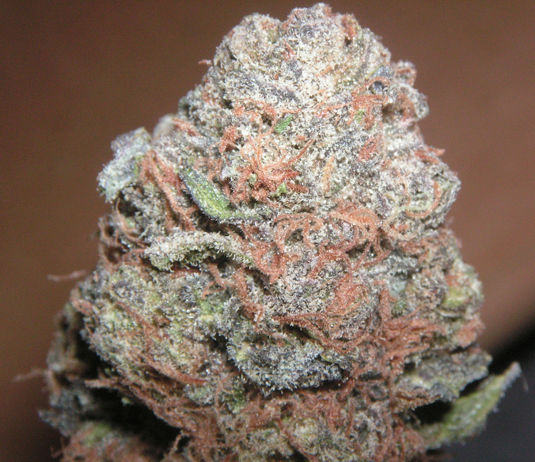 cannabis bubblegum de