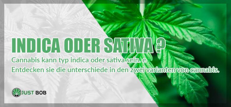 marijuana indica oder sativa?