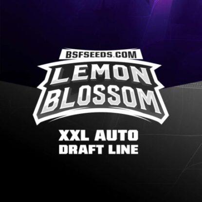 lemon-blossom-auto-cannabis-samen-kaufen