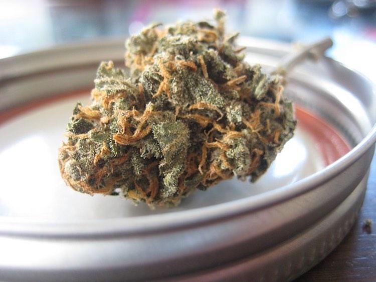 wie man Cannabisblüten