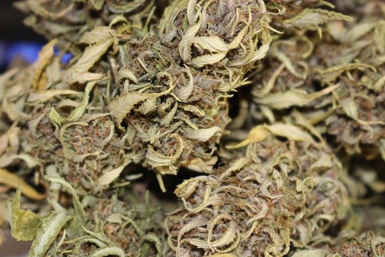 die northern light cannabis