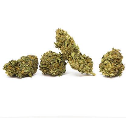 Blüten von Sweet Berry cannabis cbd