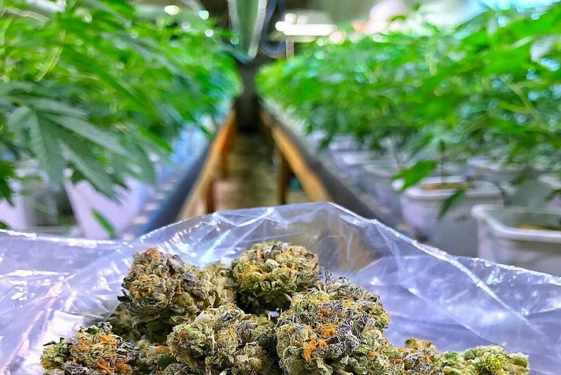Wirkstoffe von Marihuana
