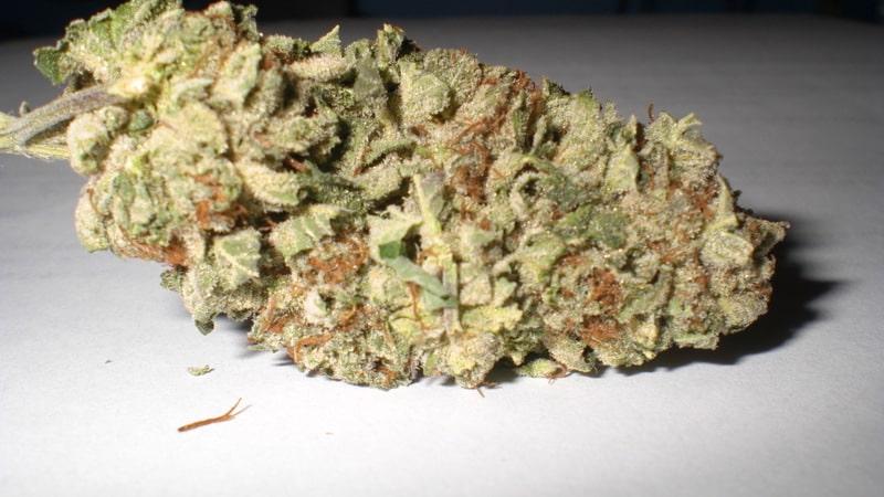 die cannabis blueten
