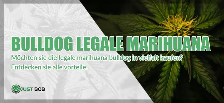 die legale marihuana bulldog