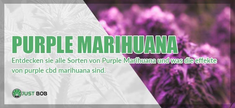 purple marihuana