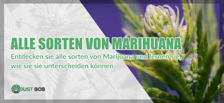 Alle Sorten von cannabis cbd