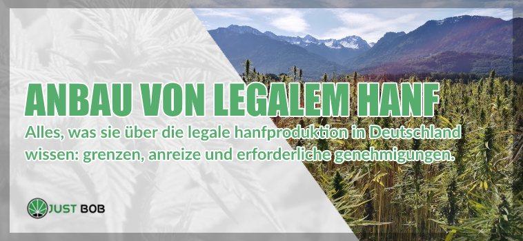 Anbau von legalem Hanf
