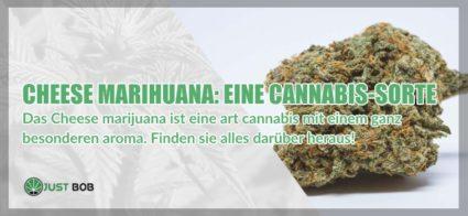 Cheese Marihuana cbd Sorte