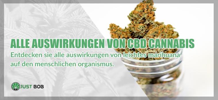 Entdecken sie alle auswirkungen von legalem CBD-cannabis
