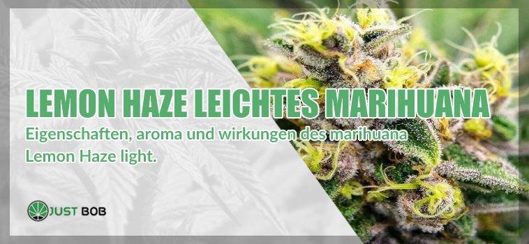 Lemon Haze leichtes Marihuana