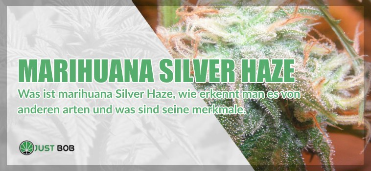 Marihuana light Silver Haze