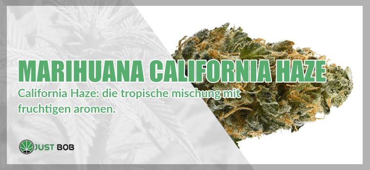 Marihuana legal California Haze