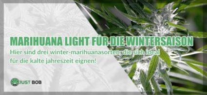 Marihuana light für die Wintersaison