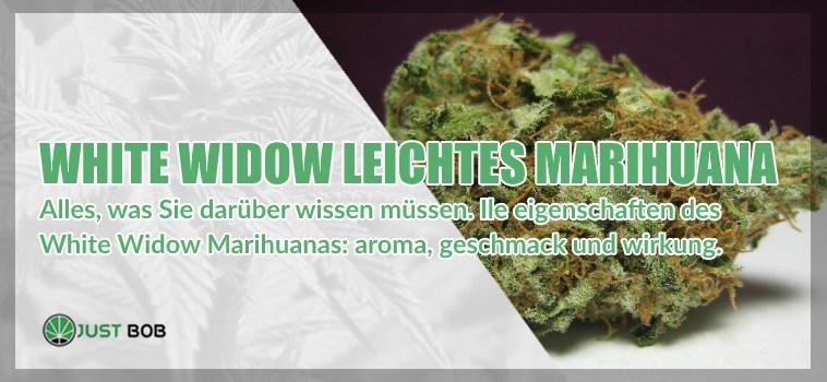 White Widow leichtes Marihuana