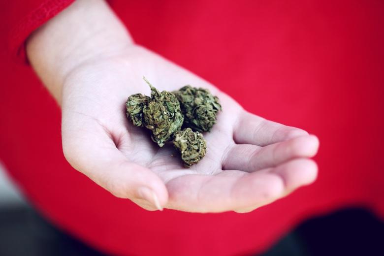erkenne reifes Marihuana cbd