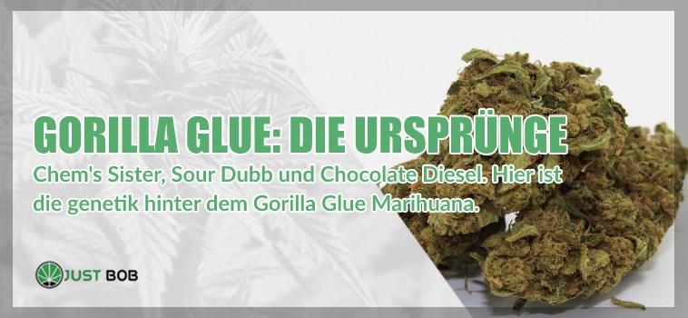 Gorilla Glue cbd Die Ursprünge