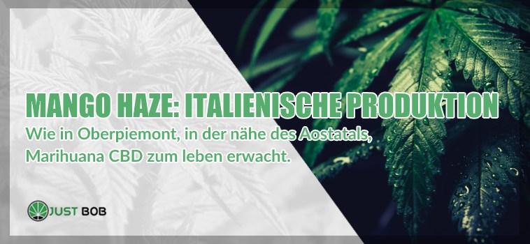 Mango Haze cbd Italienische Produktion