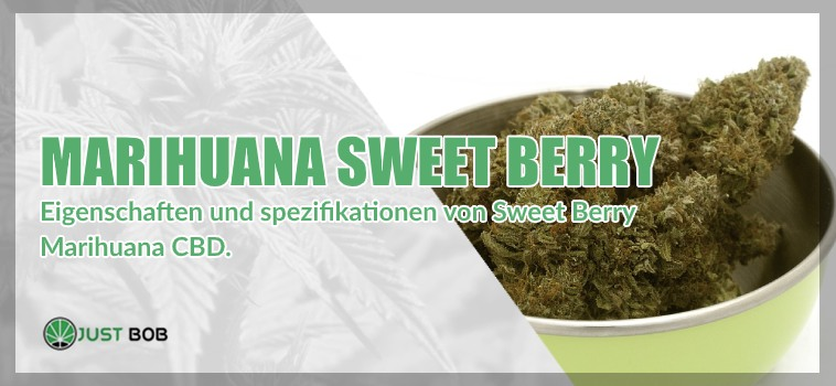 Marihuana cbd Sweet Berry