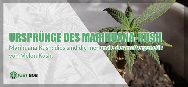 Ursprünge des Marihuana Kush