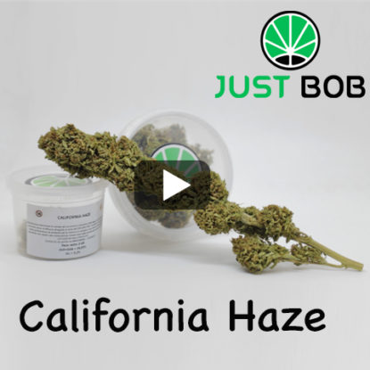 california haze video