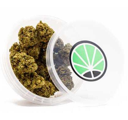 master kush cbd blumen cannabis marihuana