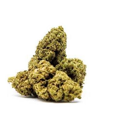 Blüten von Master Kush cannabis cbd