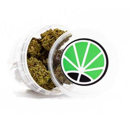 master kush marihuana pflanze