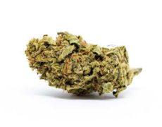 melon kush cbd bluten cannabis