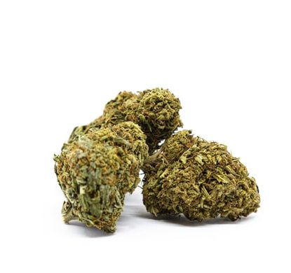 orange bud cbd bluten cannabis