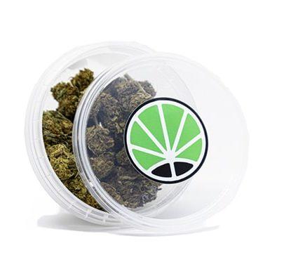 orange bud cbd cannabis pflanzen