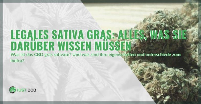 Alles, was Sie über legale Cannabis-Sativa wissen müssen