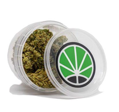 bubblegum cbd bluten cannabis pflanzen