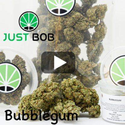 video bubblegum
