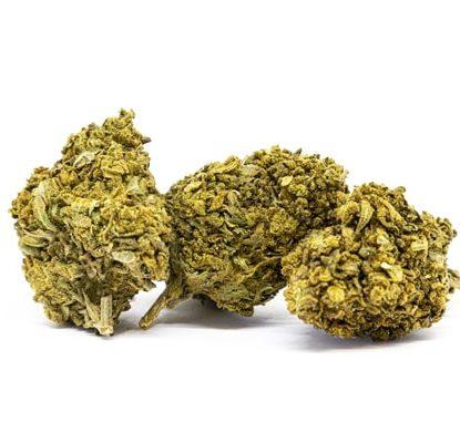 Blüten von Lemon Cheese cannabis cbd