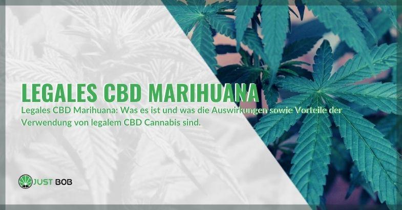 Legal CBD Marihuana