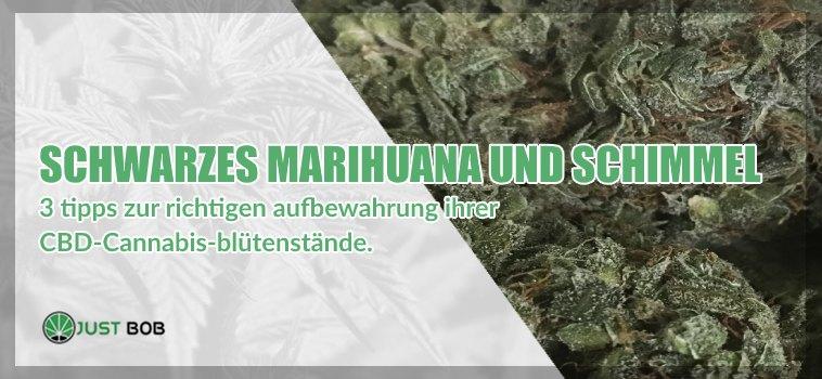 Schwarzes Marihuana cbd und Schimmel