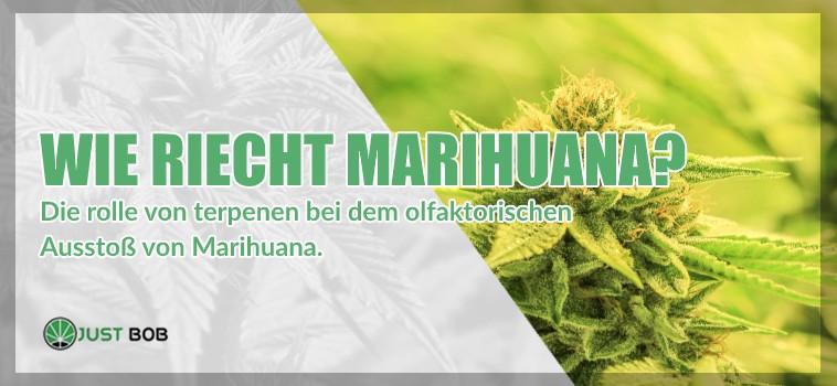 Wie riecht Marihuana cbd