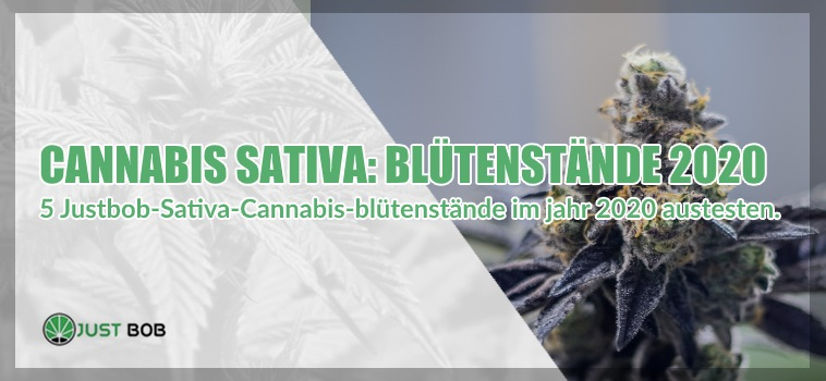 cbd marijuana blutenstande 2020