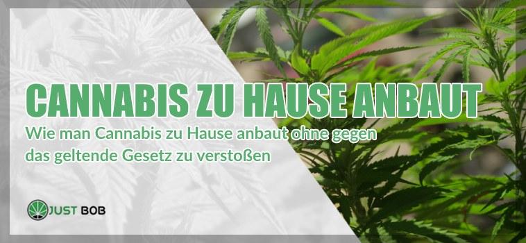 marijuana cbd zu Hause anbaut