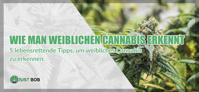 weiblichen marijuana cbd