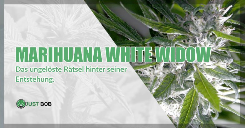 Marihuana White Widow cbd